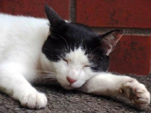 猫・白黒2