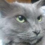 猫の熱中症予防とは?さらに一工夫するとこうなる!