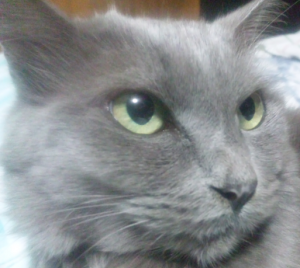 ★我家の猫です♪